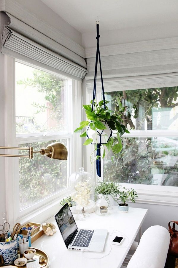 Hanging spider plant in styled office